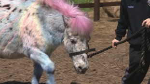 Pampered ponies? This centre lets children paint horses as therapy