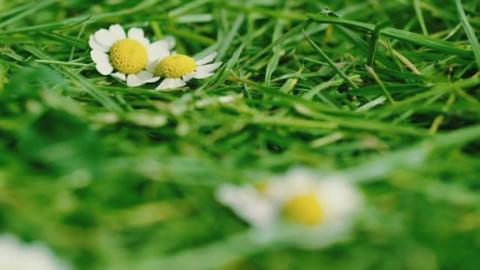 Prog_Pollen_North_16th_May