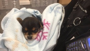 Police tweeted this picture of the puppy