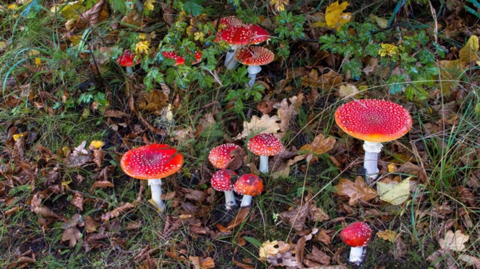 How High To Hang Paintings Magic Mushrooms Drug Could Help Treat Depression Itv News