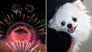 Dog lovers demand ban on firework parties as it upsets their pets