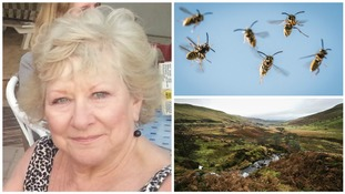 Mum died of wasp sting while on family holiday in Brecon Beacons