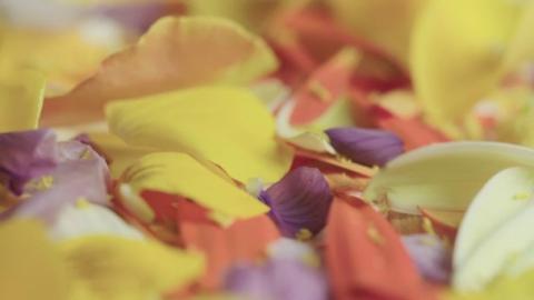 gtv_pollen_web_1800_jb