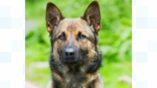 Police dog killed in the line of duty