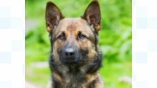 Police dog death 'tragic accident'