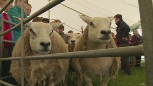 Scottish Government slammed over CAP payments for farmers