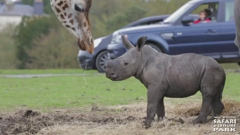 BABY_RHINO_VIDEO_FOR_WEB_