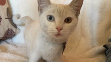 Appeal to find owners of a cat found clinging under a lorry