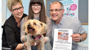 Yorkshire terrier Eddie was eight-years-old when he went missing