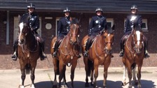 Stock photo of Avon and Somerset Police horses