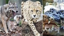 The dangerous wild animals being kept as pets in the East