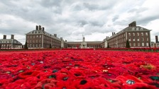 Poignant poppy display at Chelsea flower show pays tribute to armed forces
