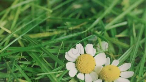 Pollen_Lunch_23rd