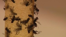 Derbyshire town in 'lockdown' after fly infestation