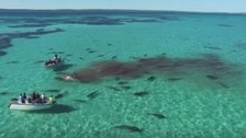 The footage was captured by a tour company during a cruise