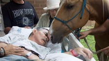 Dying veteran granted last wish to see his horses