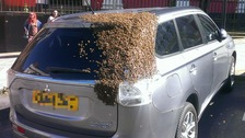 I don't bee-lieve it! Driver buzzes around with bees on boot