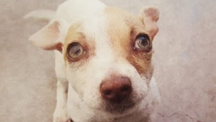 Puppy sent to rehab for heroin and meth addiction