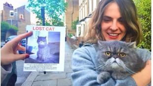 'Phenomenally grumpy' cat found after going missing
