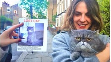 Luc the Cat has his own Instagram profile displaying selfies