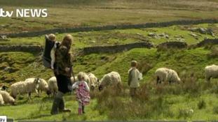 The struggles and juggles of shepherdess Amanda
