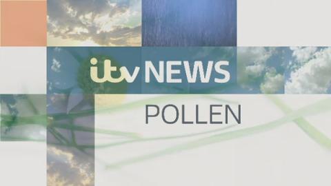 POLLEN_Tyne_Tees