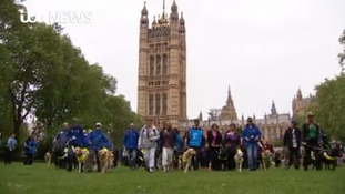 Guide dog owners protest against ' taxi discrimination'