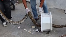 Man bitten by python while on the toilet