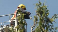 Fire crews rescue cat in Heywood