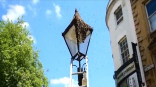 Bees swarm in Bristol City Centre