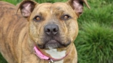 Is Freya the UK's loneliest dog?