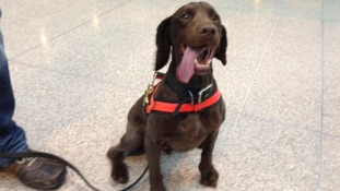 Mylo, the West Midlands Police sniffer dog