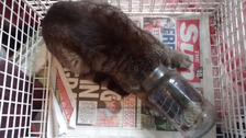 Litter warnings as cat trapped in pickle jar for days
