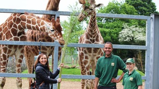Jessica Ennis-Hill takes break from Rio training to feed giraffes