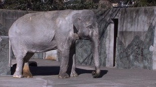 'Loneliest elephant in the world' dies in Tokyo zoo after living alone for 67 years