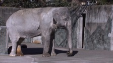 'Loneliest elephant in the world' dies at the age of 69