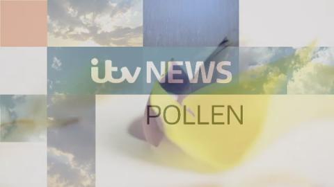 border_pollen_28