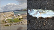 Man rushed to hospital after picking up poisonous fish