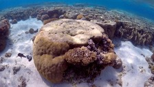 Roughly 35% of Great Barrier Reef coral 'destroyed'