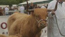 Northumberland County Show attracts thousands