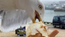Are seagulls really the scourge of the seaside?
