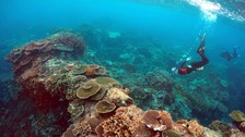 Mass bleaching 'kills off a third' of Great Barrier Reef coral