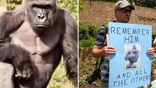 Outrage over the death of Harambe has grown