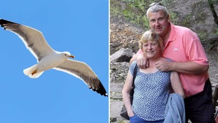 99 problems and the birds are one: Holidaymaker fined £80 after dropping ice cream in seagull attack