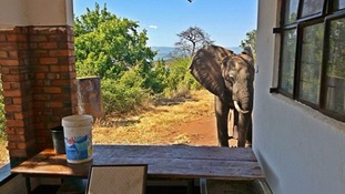 Ben the elephant