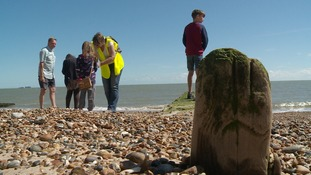 Discovering fossils, shark teeth and rare shells with beachcombing course