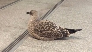 On leaving the building, I was confronted by the presence of a beautiful but still bird