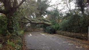 A tree blocking the road at La Haye Du Puits in Castel, Guernsey