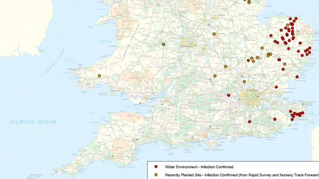 Ash Dieback Map Map shows locations with confirmed cases of ash dieback   ITV News