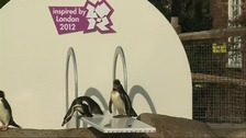 Penguins on a newly installed diving board at  London Zoo